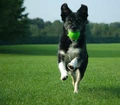 Active Dog Fetching Ball Adopt Dog