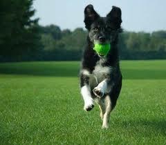 Active Dog Fetching Ball Adopt Dog