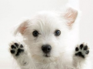 Cute Dog Paws Up Genetic Skin Urinary and Reproductive Disorders Mixed Breed Dogs