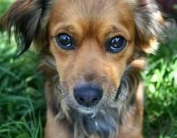 Spoil Dog Treat Biscuit Recipe Rotten