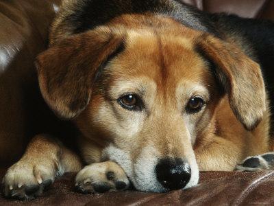 Borrow A Dog or Pet Sit For a Friend