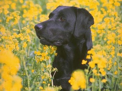 Black Lab Flowers