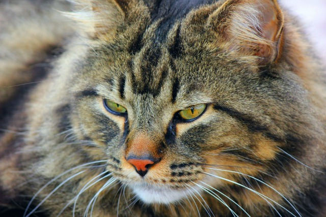 Treat Your Cat Like A King With These Tips