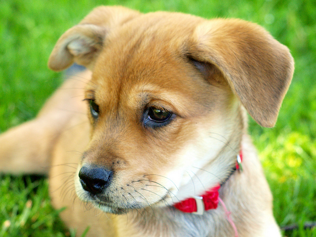 Electronic Dog Collars for Domestic and Professional Training