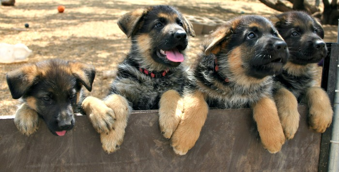 Protecting Your Pup from Potential Kennel Dangers