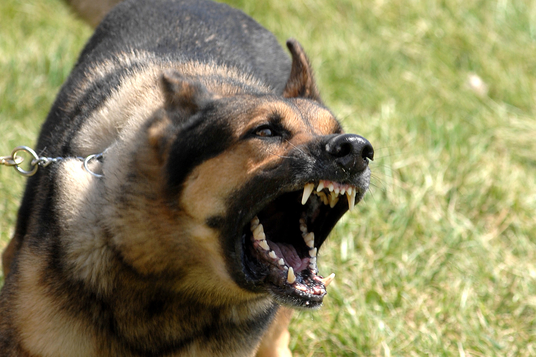 4 Ways Dog Owners Can Prevent Dog Bite Accidents