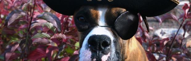 Pirate dog by petsadvisor on Flickr