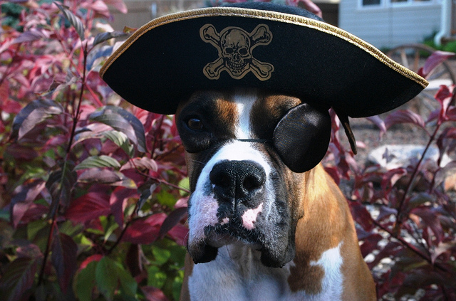 Photo: Happy Official Talk Like a Pirate Day Dog