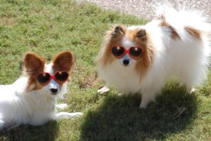 What do you mean summer's over? Dogs in sunglasses